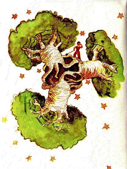 Suite d'images - Page 3 Baobab